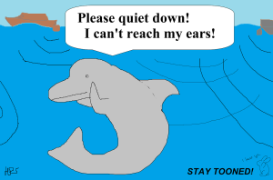 dolphin stay tooned